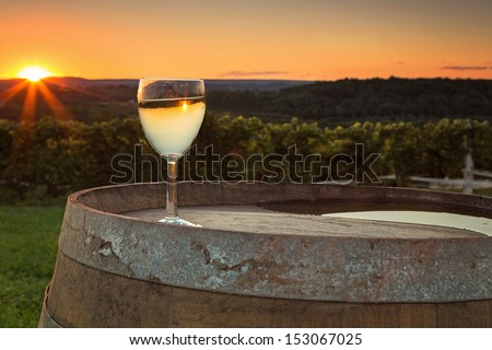Sunset at the winery - stock photo