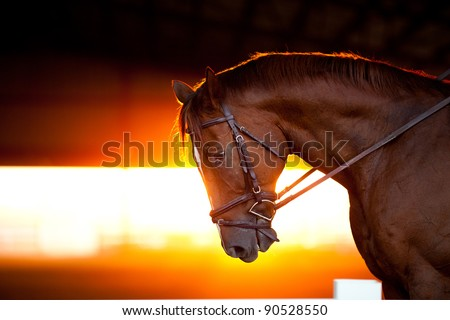 Sunset backlit portrait of a horse in an arena