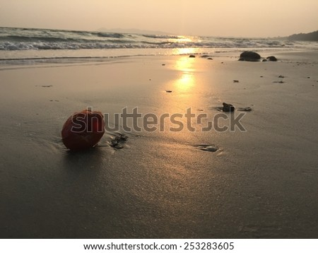 sunset beach and shell - stock photo