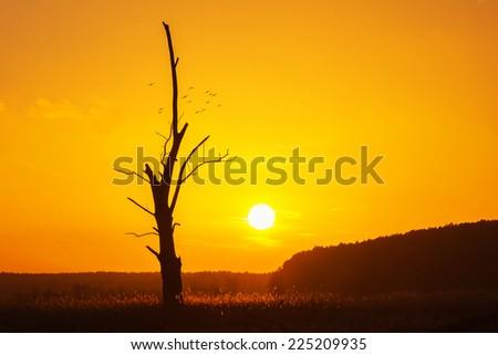 Sunset behind an old dead oak tree - stock photo