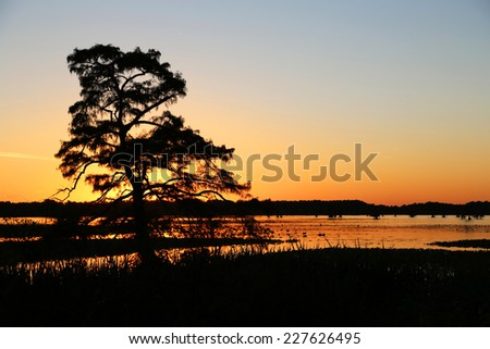 Sunset behind cypress tree - Reelfoot Lake State Park, Tennessee - stock photo