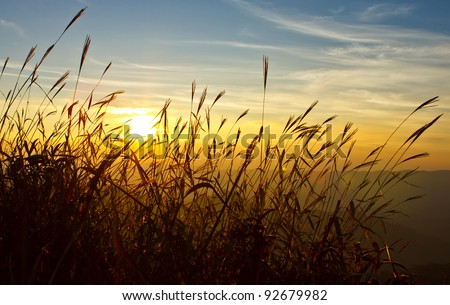 Sunset behind grass - stock photo