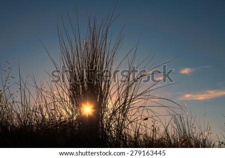 Sunset behind the grass of a dune - stock photo