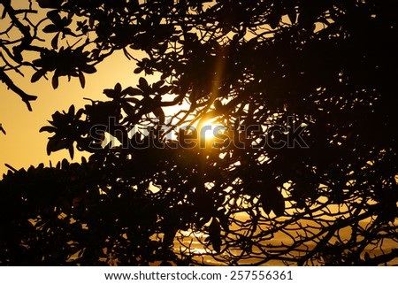 Sunset bursting through the leaves of a tree in the mountains of Oahu, Hawaii. - stock photo