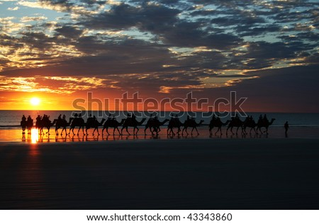 Sunset Camel Ride, Cable Beach, Broome, WA - stock photo
