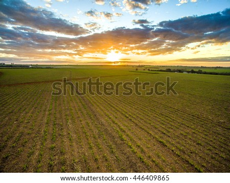 sunset cane field - stock photo