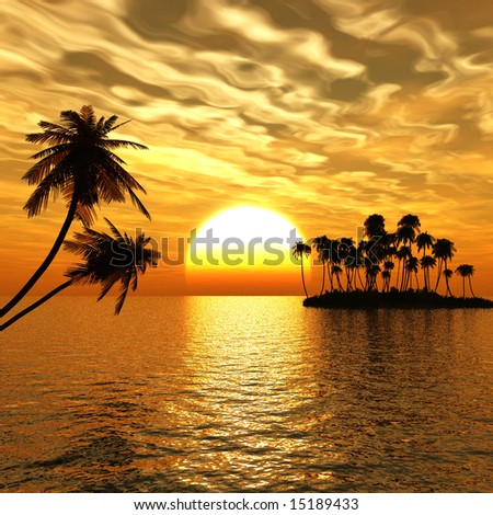 Sunset coconut palm trees on small island .