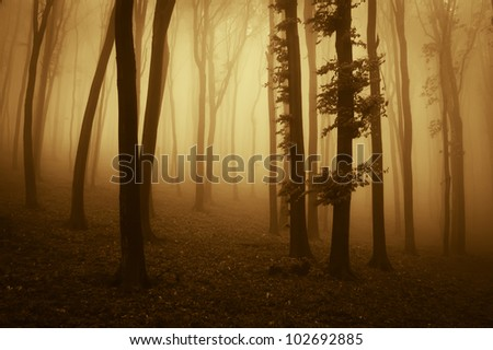 sunset colors in dark forest - stock photo
