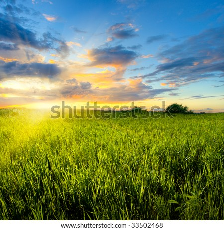 sunset colors in green the field