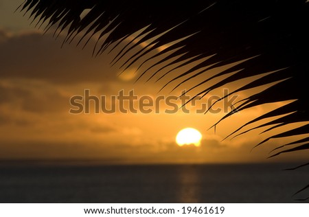 Sunset featuring palm and ocean in Rarotonga, Cook Islands