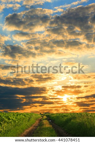 sunset field and tree - stock photo