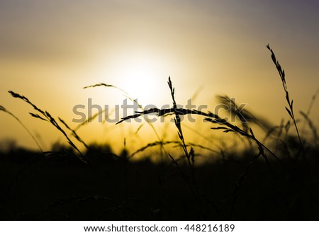 Sunset Field, Sunrise, Beautiful Vibrant Color. Abstract Shallow Focus. Evening Sun on dry grass.