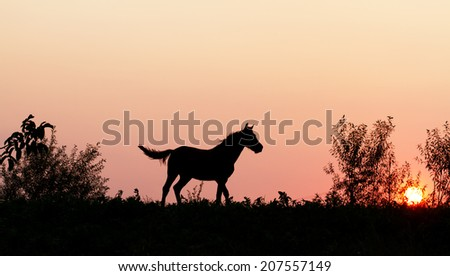 Sunset horse in nature  - stock photo