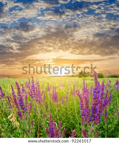 sunset in a steppe - stock photo