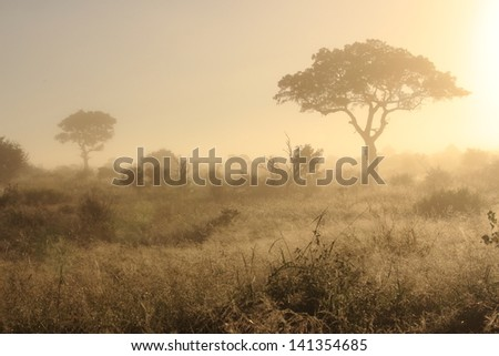 Sunset in africa acacia tree and sun kruger national park south africa - stock photo