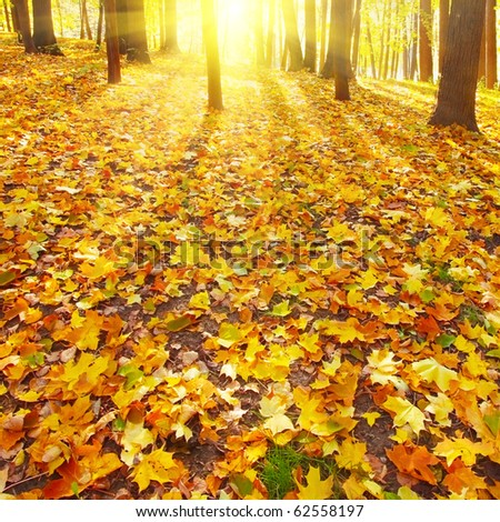 Sunset in autumn forest. - stock photo