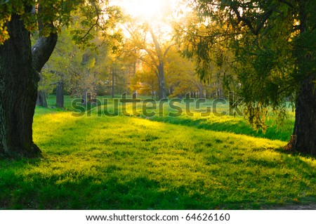 sunset in autumn forest - stock photo