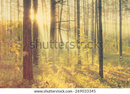 Sunset in autumn forest, retro film filtered, instagram style  - stock photo