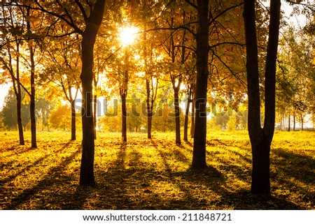 Sunset in Autumn Park. Fall Concept. Beautiful Season Background. - stock photo