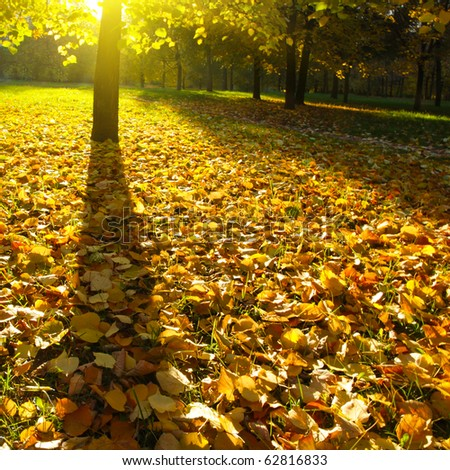 Sunset in autumnal park. - stock photo