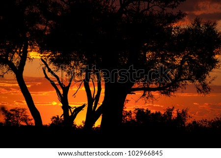 sunset in botswana - stock photo