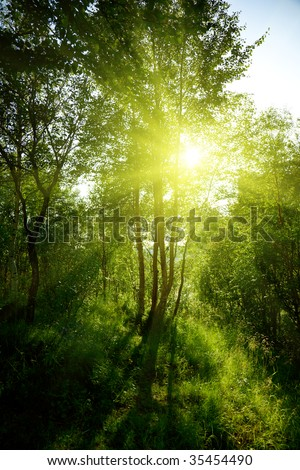 sunset in deep forest - stock photo