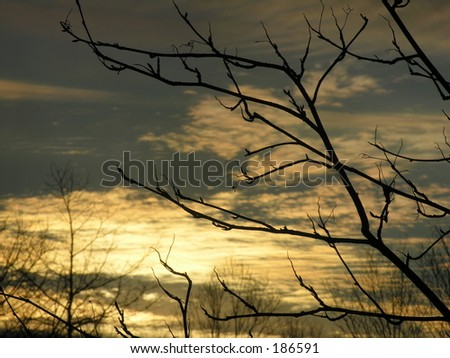 sunset in forest through branches
