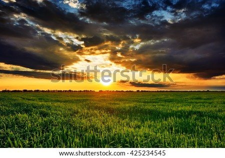 sunset in green field, spring landscape, bright colorful sky and clouds as background