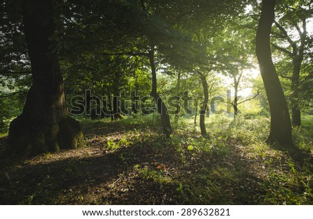 sunset in green forest - stock photo