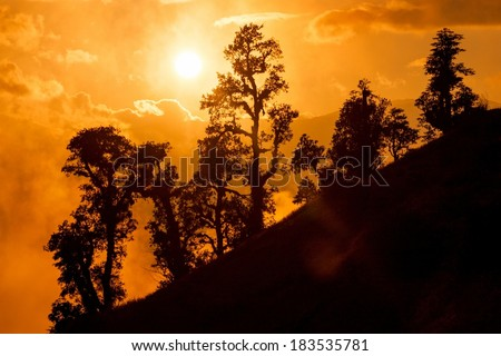 Sunset in Himalayan jungle, Junbesi, Solu Khumbu, Nepal. - stock photo