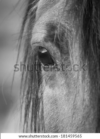 Sunset in horse's eye - stock photo