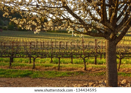 Sunset in Napa, California, USA - stock photo
