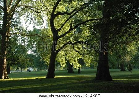 sunset in oak trees - stock photo