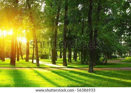 Sunset in park with trees and green grass - stock photo