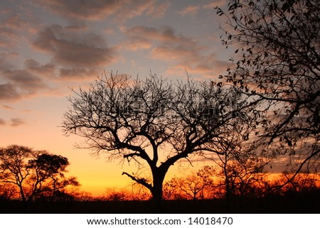 Sunset in Sabi Sand reserve, South Africa - stock photo