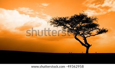 sunset in the African savannah, Masai mara, kenya - stock photo