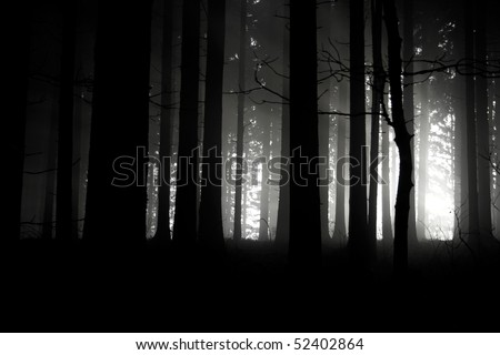sunset in the dark forest - stock photo