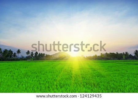 Sunset in the field, India