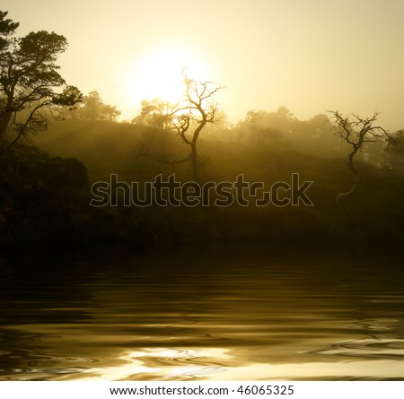 Sunset in the foggy forest - stock photo