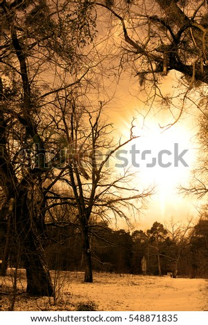 Sunset in the forest in winter. Evening twilight