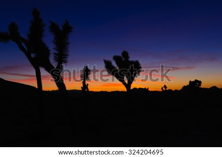 Sunset in the Joshua National forest with silhouettes of the joshua trees - stock photo