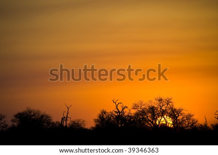 Sunset in the Kruger National Park, showing bright orange skies with silhouettes of the foliage. - stock photo