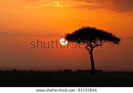 Sunset in the Masai Maria National Reserve with Acacia tree and silhoutte of Zebras, Kenya, Africa - stock photo