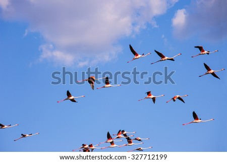 Sunset in the national park of the Camargue, Provence. Large flock of gorgeous pink flamingos in free flight - stock photo