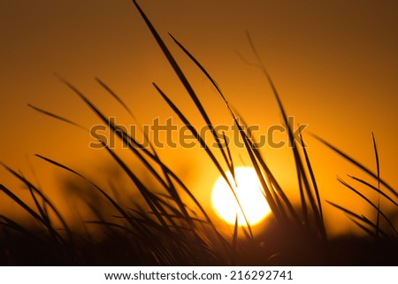 sunset in the reeds on the nature