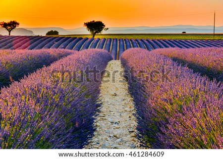 sunset in the south of france provence in flowered hills of fragrant purple lavender