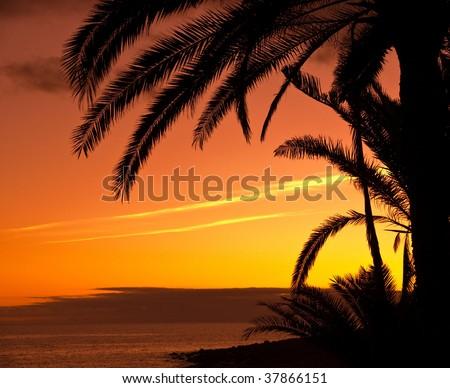 Sunset in the tropics - stock photo
