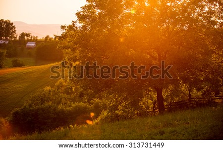 sunset in the village, farms in the summer. Landscape rural with a tree. Orchard - stock photo