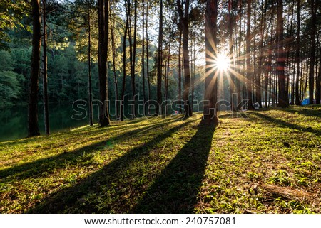Sunset in the wood between the trees strains - stock photo
