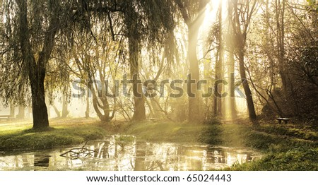 Sunset in the Woods and the lake - stock photo